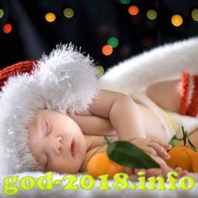 mandarinki-v-novogodnej-fotosessii-novyj-god-2018-foto