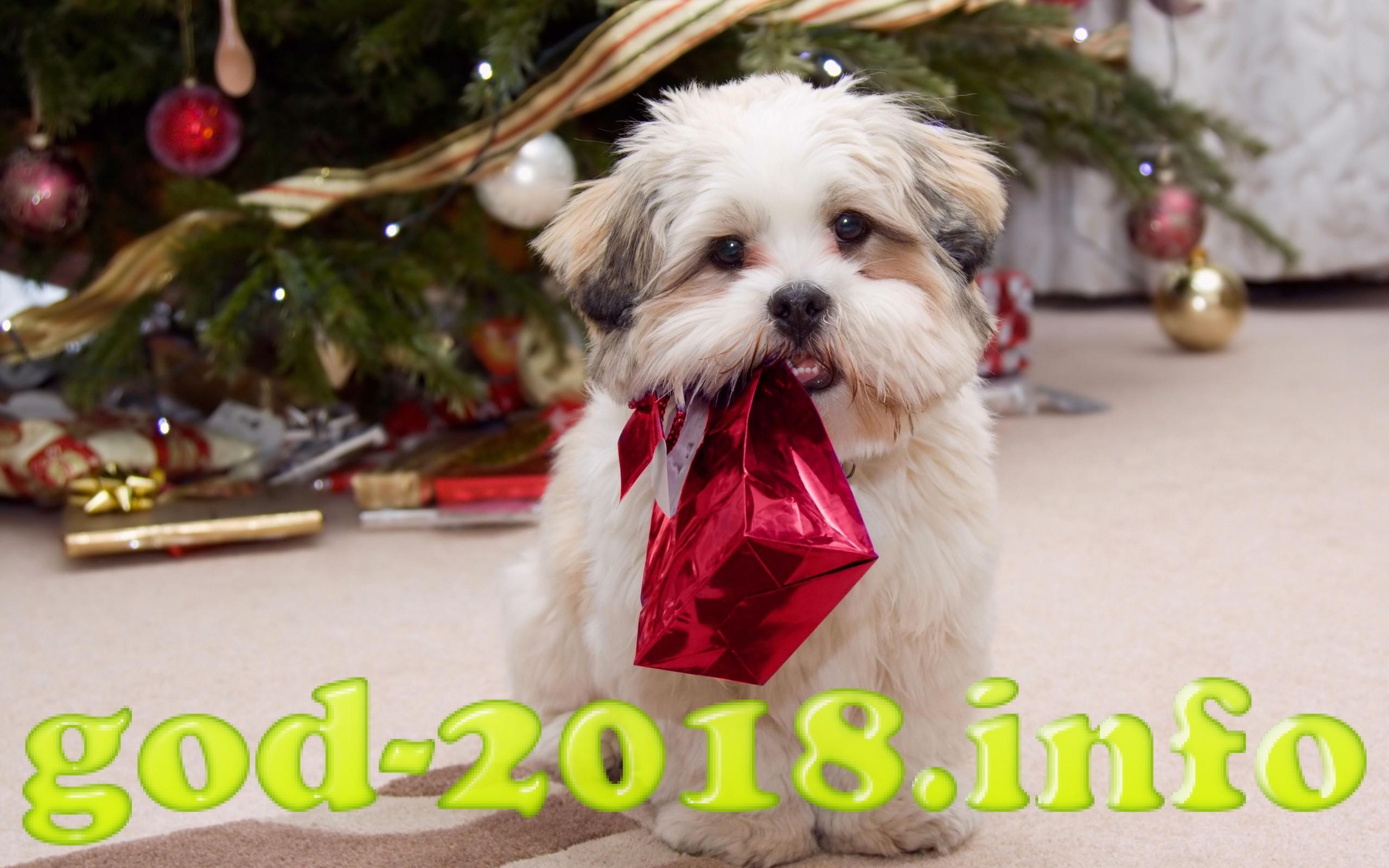 luchshie-idei-novogodnih-podarkov-2018-goda-2