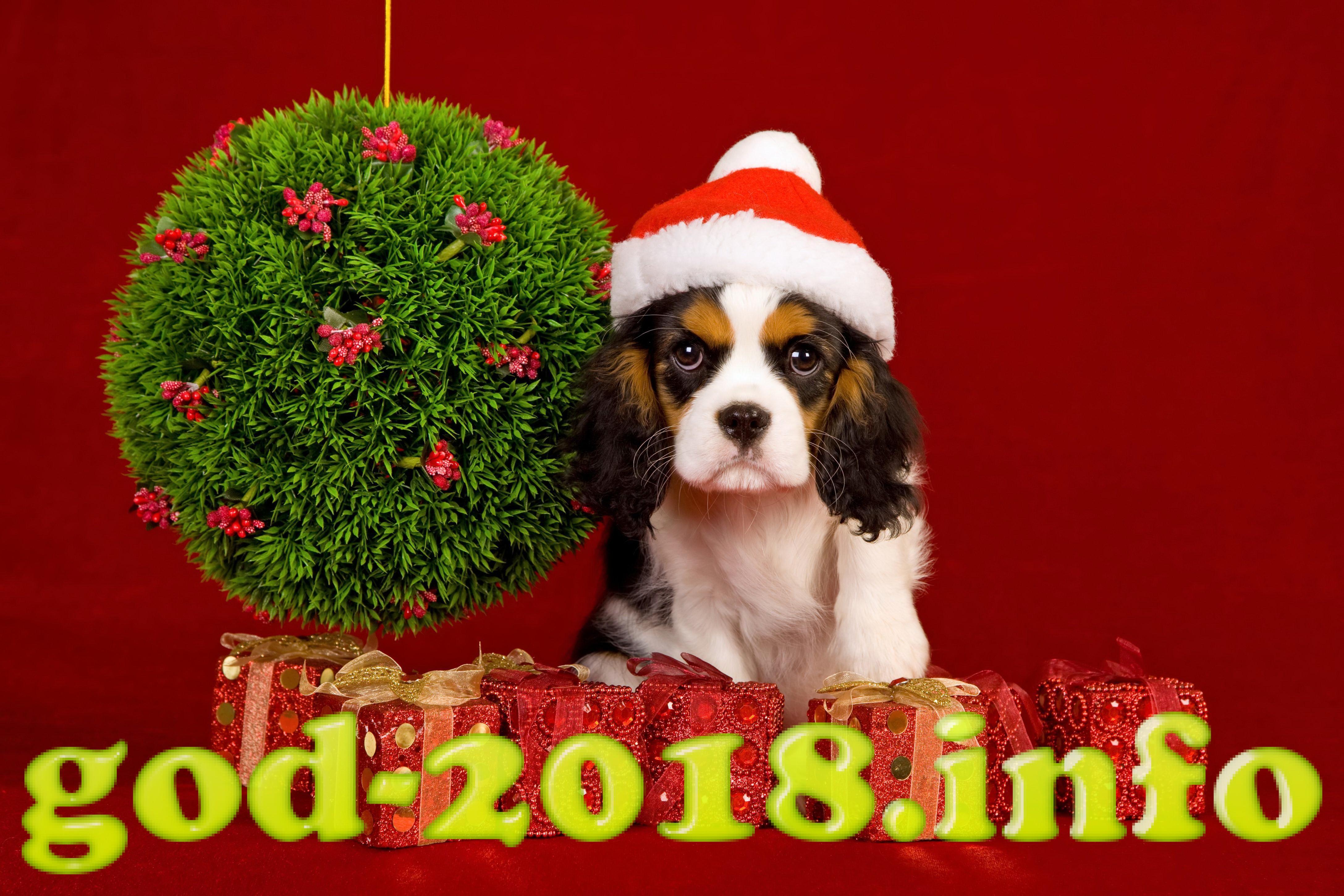 luchshie-idei-novogodnih-podarkov-2018-goda